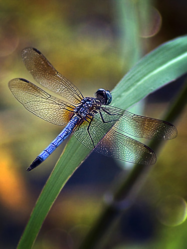blue green nature bug insect fly flying leaf wings eyes dragonfly head tail wing ce8519