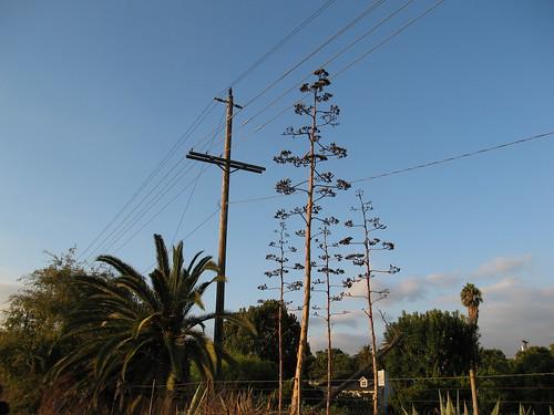 poles   by whalt