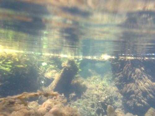 cropped-underwater-pic-diver.png - Pool Leak Doctors