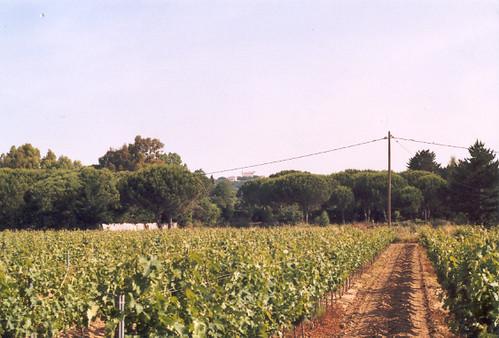 Un autre vignoble du Sud