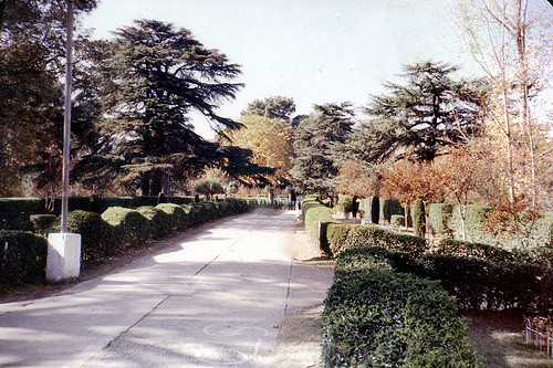 19th century ,..Lady Gordon's Garden..??, Abbottabad, where massive Cedars of Lebanon are visible on both sides,..these trees and fragrant camphor trees were brought from England in pots...Photo taken 1986 AD, National film camera | by Environmentalist