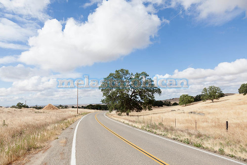 california travel trees light sky usa foothills west nature grass america landscape gold countryside scenery colorful view natural country scenic meadows dry farmland sierra hills valley western fields dried mariposa