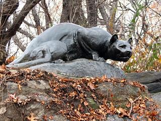 Central Park Cat