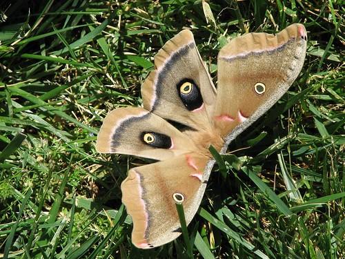 Moth at Arlington Cemetery | by ghbrett
