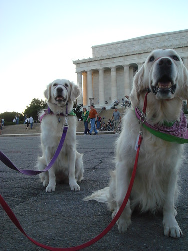 Frisket and Sailor at the Lincoln Memorial | by epc