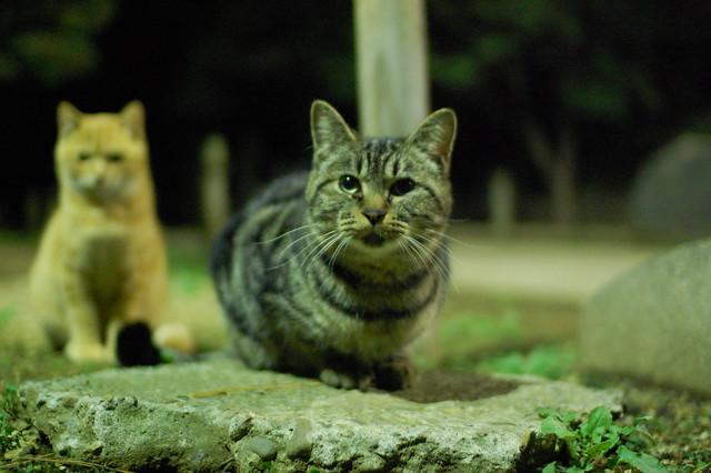 猫 2007/11/13 Cats