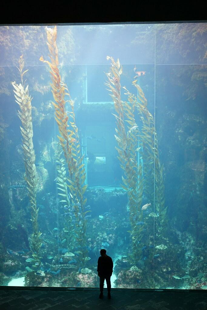 国立海洋生物博物館_30
