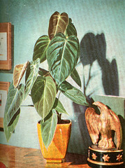 Plant with Eagle   by mark.hogan