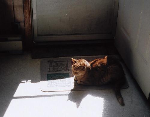 lion in sun