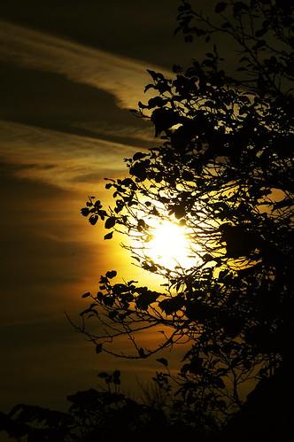 morning sky orange sun black tree leaves silhouette fog clouds sunrise dark early nebel foggy wolken äste sonne blätter sonnenaufgang baum schwarz morgens nebelig oct9 explored 2007248