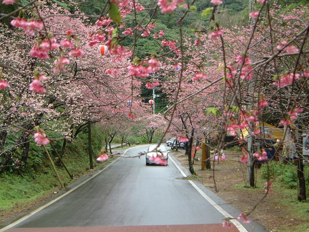 日本一早い1月のお花見