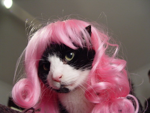 Mustapha in a Kitty Wig