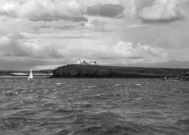 Northumberland, The Farne Islands (24)