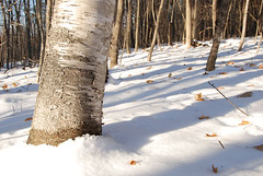 winter walk.3 | by SouleMama