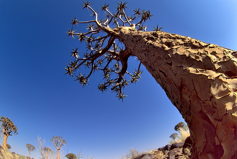 Namibia, quiver trees