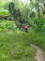Wrong turn near Cahuita