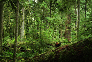 Cathedral Grove | by backpackphotography
