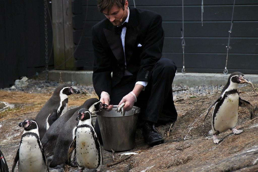Pinguinfütterung