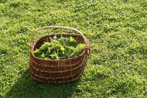 la cueillette des orties | by arpent nourricier