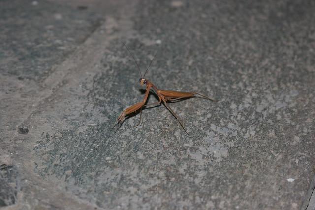 Insecte dégueu sur la terrasse de Harris I