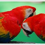 Bird whisperers | സല്ലാപം