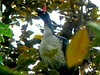 """""""Don"""" Guan by Jeff's Digiscoped Wildlife pics"""