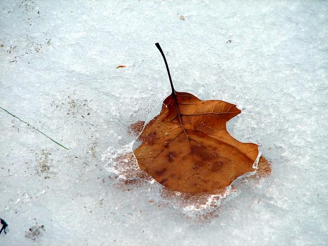 Iced Autumn