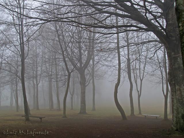 Bosque de Hayas - Invierno sin nieve