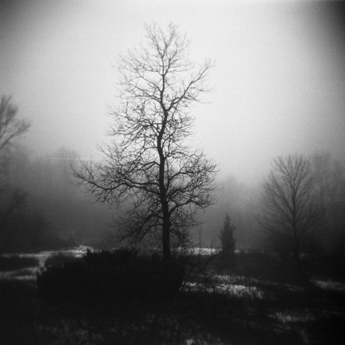 tree rain fog holga michigan trix annarbor diafine pittsfieldtownship lilliepark scratcheswhatscratches