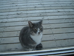 Kedimiz Lola'nin bir resmi