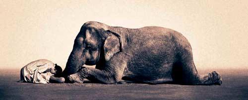 Elefante - Gregory Colbert