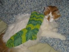 Max&sock
