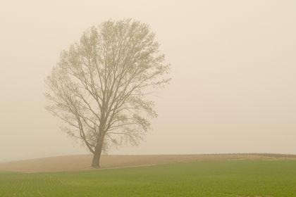 Risumiru - a tree