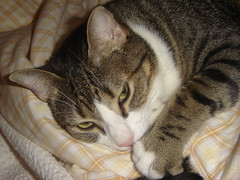 Buzi agarrado à minha cama