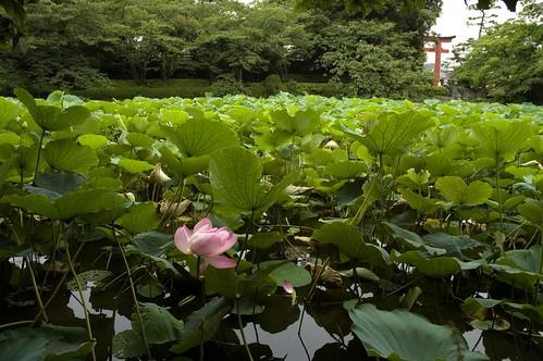{7-12} Tsurugaoka Hachimangu Shrine