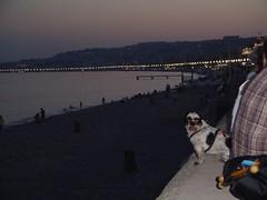 riviera dog