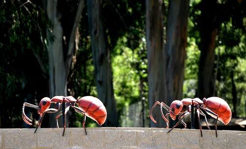 Ants Crawl