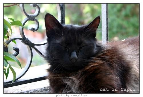 cat-capri-2