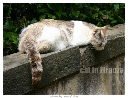 cat-firenze0608-11