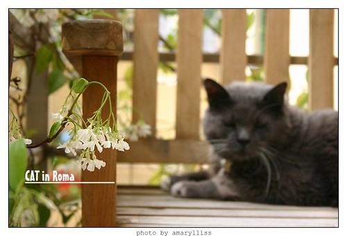 cat-roma0602-8