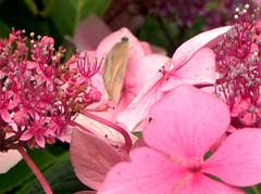 fleurs, 4 août 2005