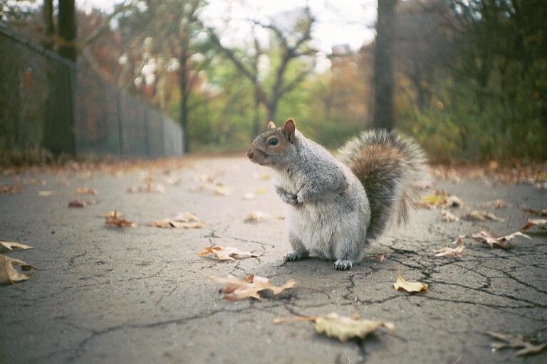 "Urban Wildlife, ""A native New Yorker"""