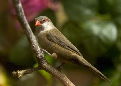 BirdieLoRes