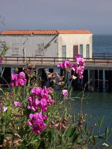 Flowers at Fort Mason