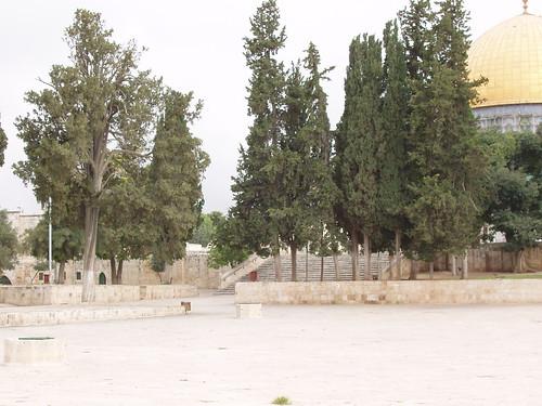 08-09Israel 115