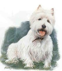 West_Highland_Terrier