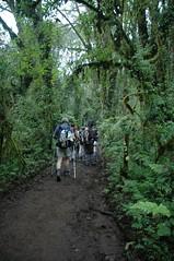 Te voet door het oerwoud...