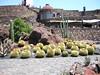 Garden of Cactus
