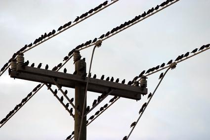 BirdsLoRes