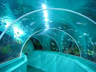 396_30-07-2005_southsea_blue_reef_aquarium | by Sleepless in Somerset